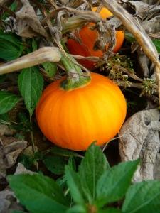 Wee bee little pumpkin