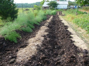 Mulched potatoes and asparagus