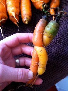 Entwined love carrots