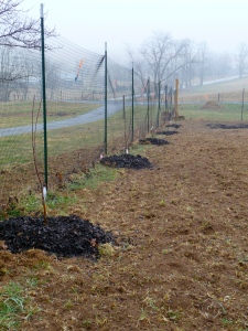 Red Baron, Iowa Beauty, and Quinte apple trees planted.
