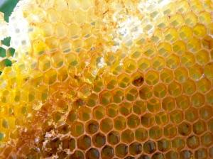 Honeycomb - smells sooo good.