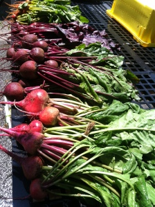 Chioggia and Red Ace Beets