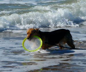 Frisbee Fanatic Jett