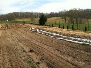 Jordan transplanting onions