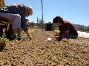 Mom helping plant carrot seeds