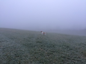 Foggy and frosty walk