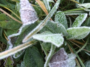 Frost on clover