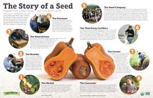 Story_of_a_Seed