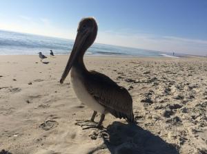 Coastal wildlife