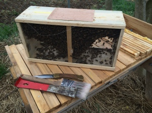 Installing bees