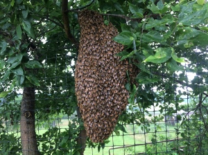 second swarm